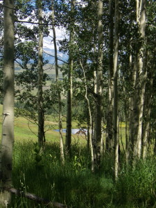 telluride-aspen-trees-living-intuitive-counseling-forms
