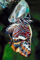 butterfly-cocoon-creating-successful-change