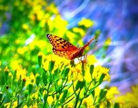butterfly-on-flower-crating-successful-change