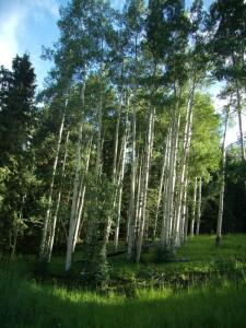 Forms-telluride-aspen-grove-Birth-Intuitive™